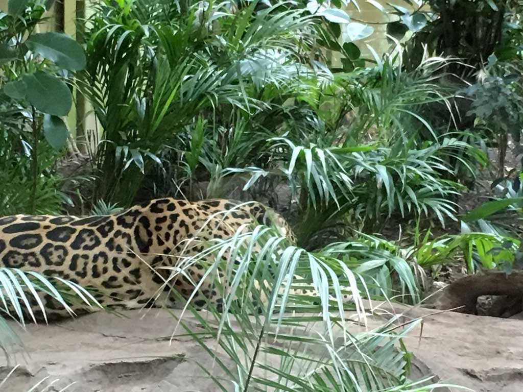 Chester Zoo Review You Need To Visit Family Travel Blog