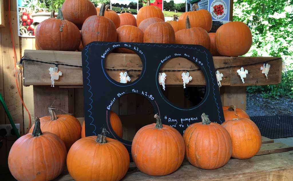 a8d4a89ad4d Best places in the UK to pick your own pumpkin this Halloween – You need to  visit