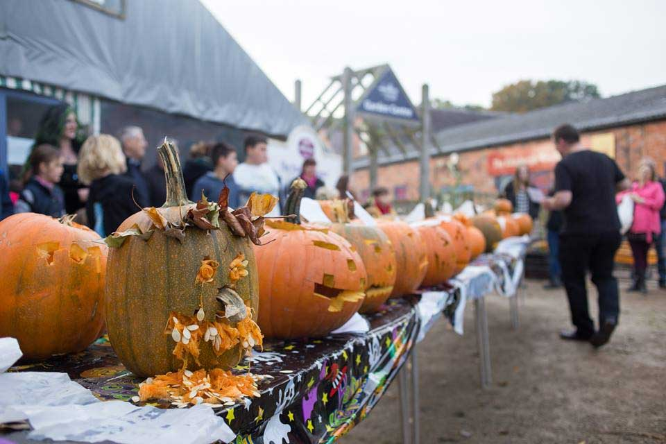 9eb91ecc831 The popular Pumpkin Week returns to Hatton Adventure World from 25 – 28  October. Children can visit the popular family attraction to pick their own  FREE ...