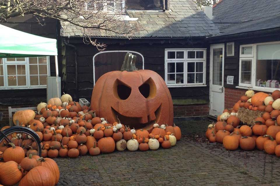 0c0bf0f6252 Best places in the UK to pick your own pumpkin this Halloween – You ...