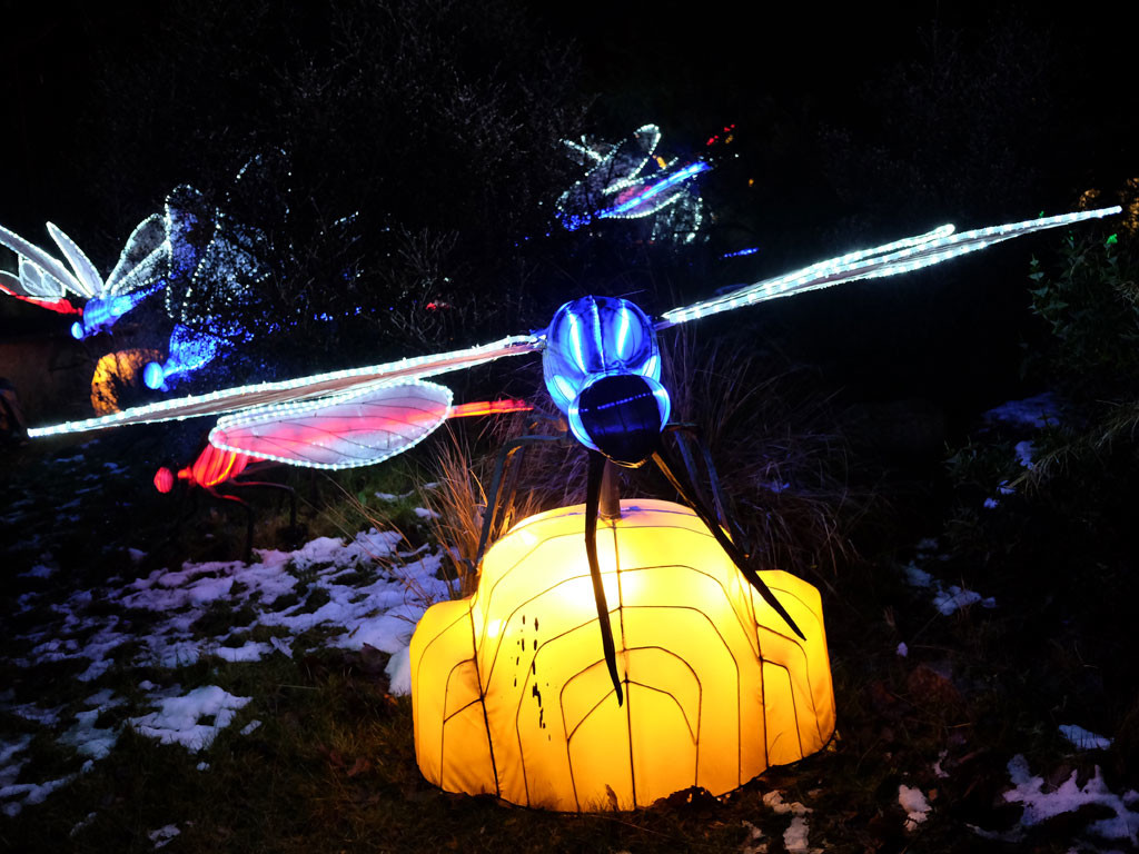 Giant Lanterns Of China At Edinburgh Zoo You Need To